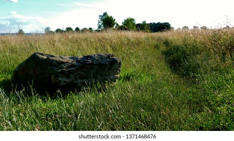 a trampling path in the tall grass