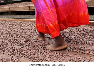 Trampling through cocoa beans in Grenada, a process in traditional chocolate production