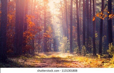 Tranquil autumn landscape. Fall nature. Forest path in sunlight through colorful foliage. Autumn background.