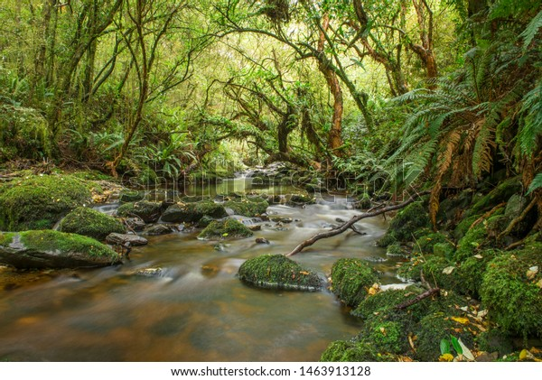 Tranquil creek among forest, Blue Mountains, West Otago, New Zealand