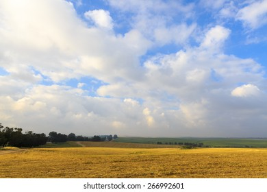 Tranquil field of harvested wheat with a blue sky and clouds