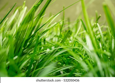 Tranquil fresh grass under a warm morning sunlight, reminding us to conserve and protect mother nature, make responsible decisions and be aware of environmental issues.  Copyspace room on bottom.