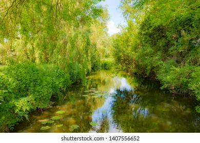 Tranquil and idyllic river seen within a nature reserve during early summer. Various ages of Willow Trees line the dense river bank, seen from a narrow footbridge.
