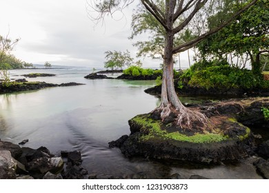 Tranquil inlet at Hawaiian beach in Hilo, Hawaii. Tree standing on protruding rock; rocky outcrops and vegetation in background. Clear pool leads towards the ocean.