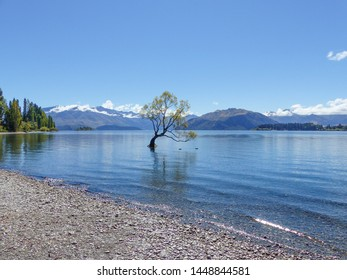 Tranquil Lake Wanaka. Cloud topped mountains, blue skies and tree in the lake. Light ripples of water lapping the pebble beach shoreline.
