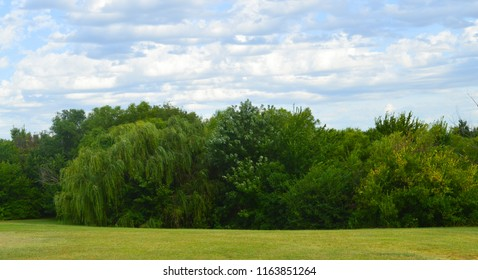 A tranquil landscape of a green field, trees lined up and a blue sky with white clouds
