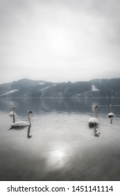 A tranquil and mystical landscape with graceful swans in the water and mountains with snow in the background on a peaceful morning in Austria.