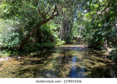 Tranquil Oliver Creek in The Daintree, Tropical North Queensland, Australia