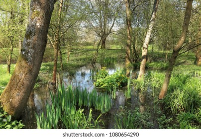 tranquil pond in an English landscape garden in Spring