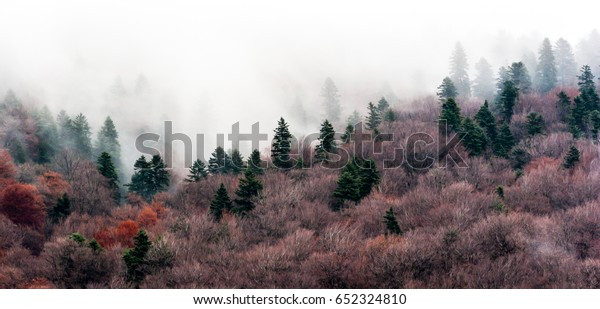 A tranquil scene with fir trees and mist.