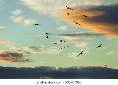 Tranquil scene with seagull flying at sunset, spectacular sunset over the sea and silhouettes of flying seagulls, Sunset over Scottish sea with stones, UK