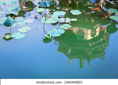 Tranquil scene of water lily lotus leaves at pond, reflection of traditional asian architecture detail and blue sky (copy space)