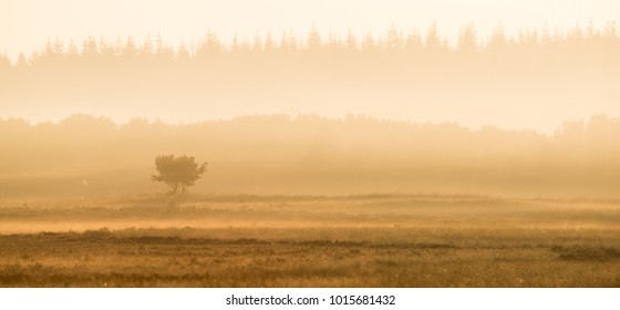 Tranquil scenery with morning mist landscape