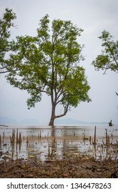 Tranquil scenery of tree growing from the water, Koh Lanta, Thailand