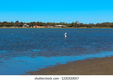 A  tranquil scenic view of waterbirds at the shallow end of the Leschenault Estuary  conservation park near Australind Western Australia on a calm  cloudy day in late spring as the tide is receding.