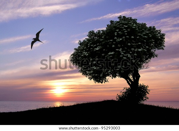 Tranquil silhouette image of a beautiful tree with white flowers in the sunset.