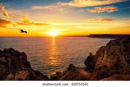 Tranquil sunset scenery at the ocean with the sunlight reflected on the water, a flying bird and the rocky coast