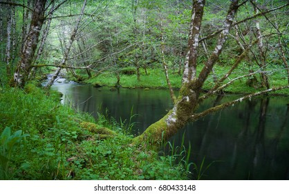 A tranquil woodland stream winds between grass covered banks in the Oregon Coast Range near the Willamette Valley.