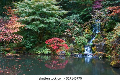 Tranquility: Autumn in the Japanese Garden in Portland. Turning leaves and waterfall reflected in the peaceful pond.