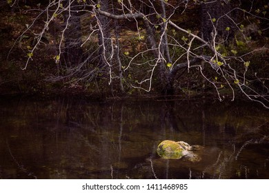 Tranquility.  Mossy object in a forest lake. Still pond, protrudes stone overgrown by moss, dark water. Branch over water surface. Zen background. Concept of calmness, zen and minimalism.
