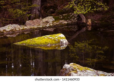 Tranquility. Mossy rock in a forest lake. Still water, protrudes stones overgrown by moss, darkwater. Reflections in transparent water. Zen background. Concept of calmness, zen and minimalism.