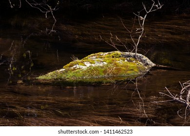Tranquility. Mossy rock in a forest lake. Still pond, protrudes stones overgrown by moss, dark water. Reflections in transparent water. Zen background. Concept of calmness, zen and minimalism.