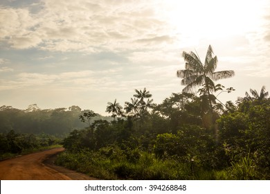 Trans-Amazonian Highway with a lot of Acai Palm Trees in Brazil