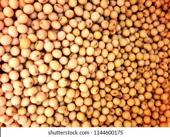 transgenic soybeans in brazil