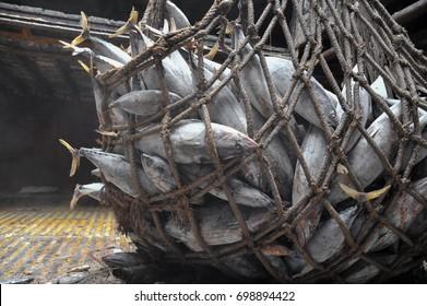transhipment for frozen skipjack tuna mix to port