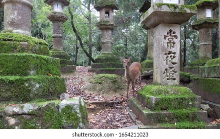 "Translation from Japanese characters carved in stone: ""The law of the law is protected - thanks to the wise disciples of the Buddha."" Deer in Kasuga Taisha Shinto shrine. UNESCO Heritage Nara, Japan."