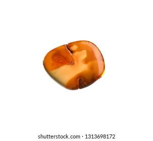 translucent mixed bone amber