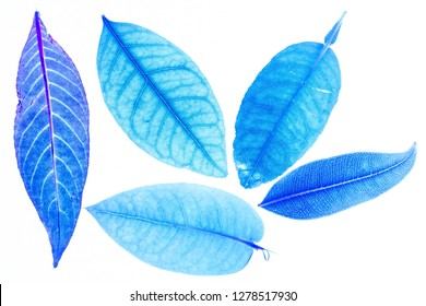 Transparent blue leaves with isolated white background indicating new futuristic technology for text adding commercial