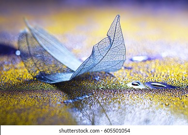Transparent blue sheet on a glass with drops of dew water on a yellow and purple background macro soft focus. Abstract elegant dreamy artistic image .