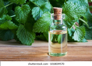 A transparent bottle of melissa (lemon balm) essential oil with fresh melissa twigs in the background