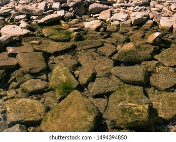 Transparent clear water of a small mountain river flowing on a sunny summer day along a rocky channel covered with green silt.