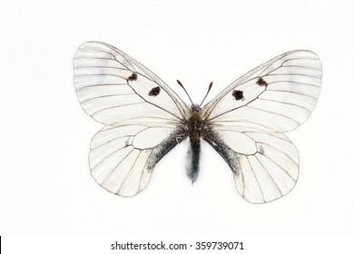 Transparent Clouded Apollo butterfly, latin name Parnassius mnemosyne isolated on white