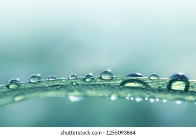 Transparent drops of water dew on grass close up.Natural background with copy space.