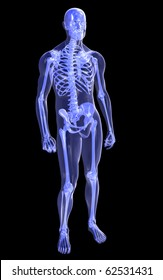 Transparent Full Body and Skeleton, Relaxed Pose