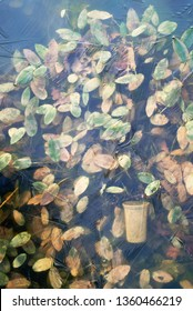 transparent ice on the lake through which frozen algae and a flower pot are visible