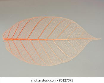 a transparent leaf.