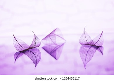 Transparent leaves are on mirror surface with reflection on mauve background, abstract macro natural dreamy artistic image. Fairytale wallpaper