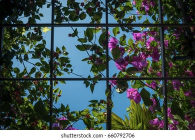 Transparent pedals flowers