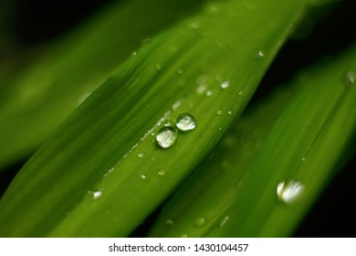 Transparent rain water drops on green leaf macro. Nature background.