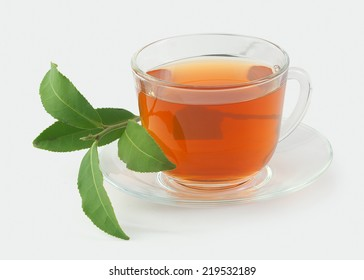 Transparent tea cup with fresh green branch of tea on the gray