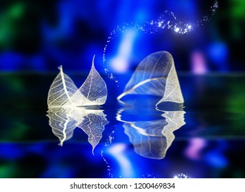 Transparent white leaves  on dark-blue backgroundwith reflection in water surface, abstract macro. Artistic image of ship in lake waters. Natural dreamy artistic image