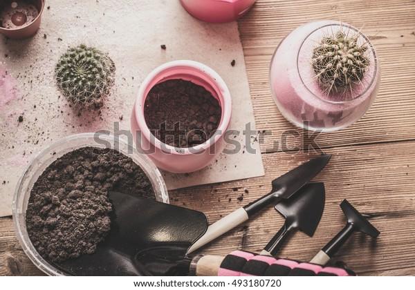 Transplant cacti.