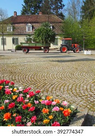transport of palms, Bad Pyrmont, Germany