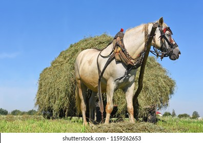 Transportation of hay by a cart in a summer landscape