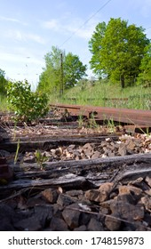 Transportation / Railway: Small birch growing between the railway sleepers of an old and no longer used siding at the edge of an electrified double-track railway line in Central Germany on a sunny day