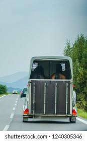 transportations of horse